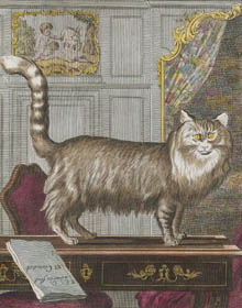 An Angora cat, print from Buffon, Histoire Naturelle.